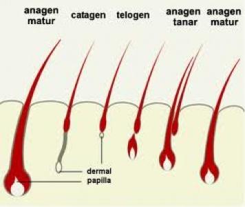Does propecia increase estrogen